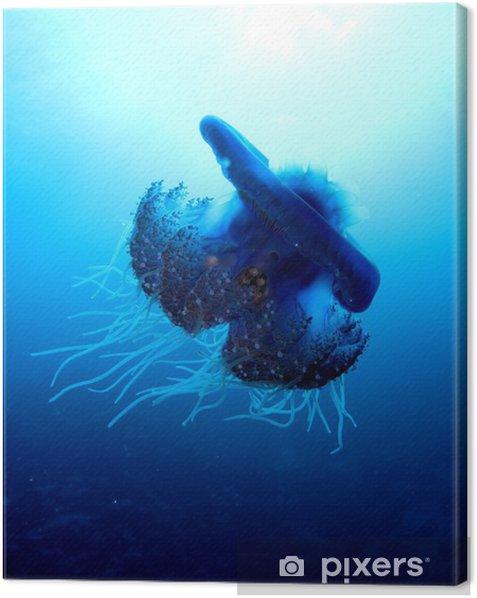 Tableau sur toile Chou-fleur méduses - Céphée Céphée - Animaux marins