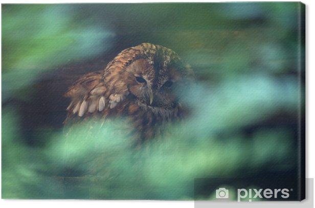 Tableau sur toile Chouette hulotte - Oiseaux