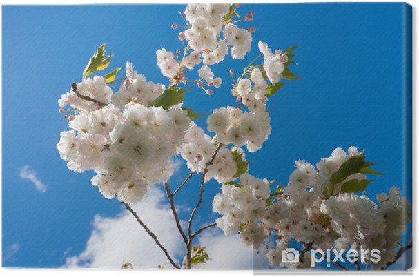 Tableau sur toile Ciel bleu fleur de cerisier - Fleurs