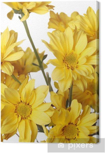 Tableau marguerite jaune 3 tableaux sur toile close up de marguerite jaune avec sur le blanc