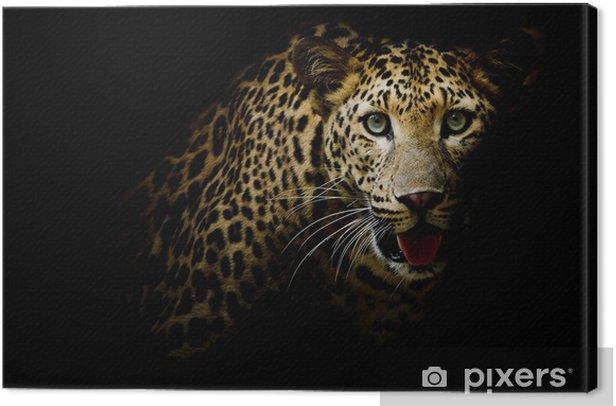 Tableau sur toile Close up portrait d'léopard avec des yeux intenses - Mammifères