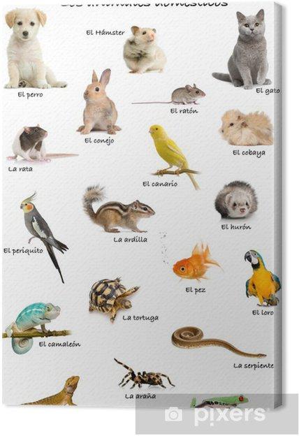 Tableau sur toile Collage des animaux de compagnie et des animaux en espagnol • Pixers® - Nous ...
