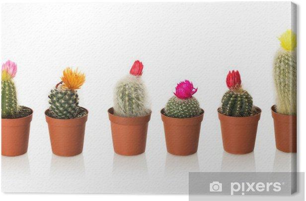 Tableau sur toile Collection de cactus dans un pot sur fond blanc - Fleurs