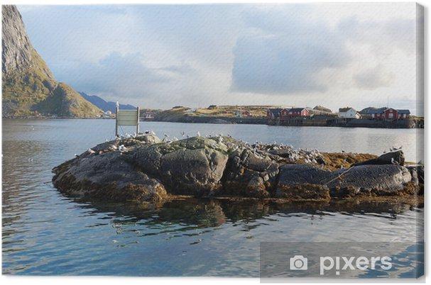 Tableau sur toile Colonia di Uccelli - Isole Lofoten - Oiseaux