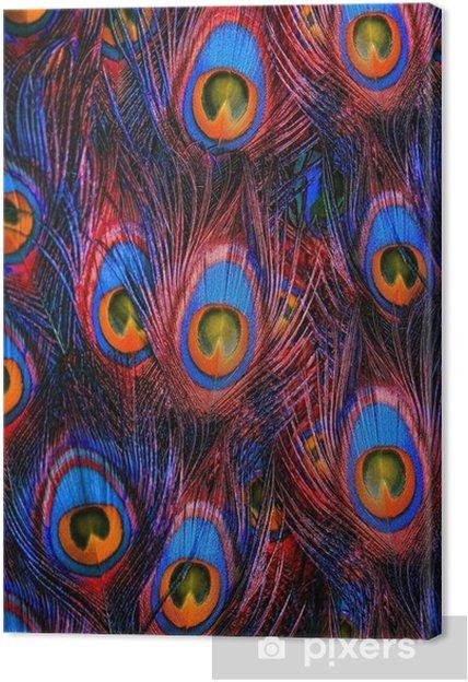 Tableau sur toile Colorful plumes de paon fond - Thèmes