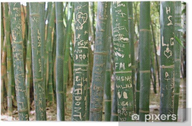 Tableau sur toile Colorful Trunks bambou dans la lumière du soleil dans la forêt tropicale - Plantes