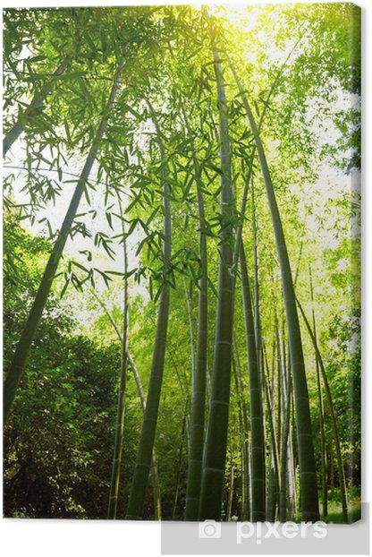 Tableau sur toile Contexte Bamboo Forest - Forêt