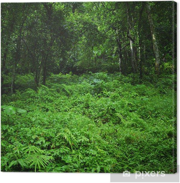 Tableau sur toile Contexte de nature verte. Jungle tropicale paysage sauvage de la forêt - Thèmes