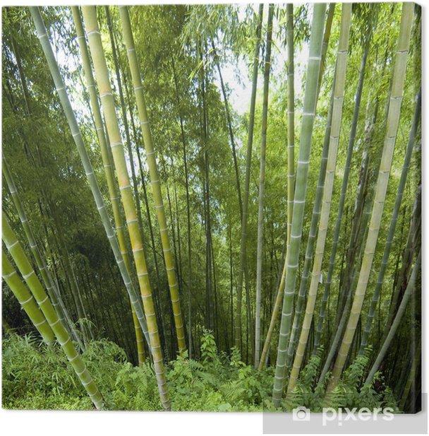 Tableau sur toile Contexte en bambou - Europe