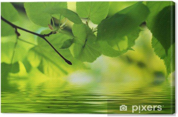 Tableau sur toile Contexte naturel: tilleul laisse relflecting dans l'eau - Saisons