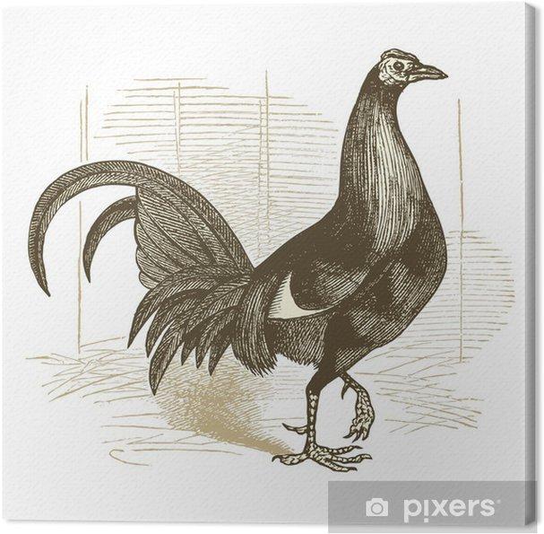 Tableau sur toile Coq de combat - Oiseaux