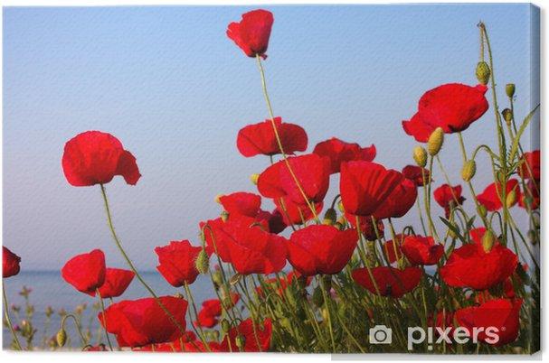 Tableau sur toile Coquelicots rouges et ciel bleu et la mer - Thèmes
