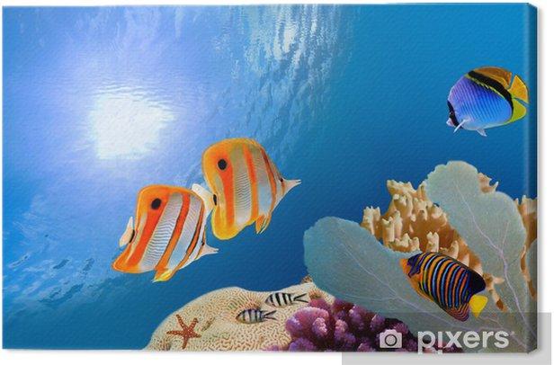 Tableau sur toile Coral Reef Tropical - Récif de corail