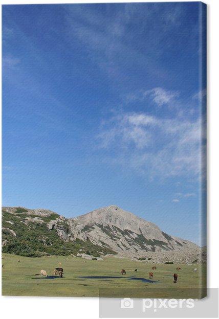 Tableau sur toile Corse - chevaux sauvages - Europe