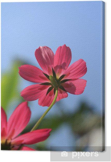 Tableau sur toile Cosmos fleur rouge - Fleurs