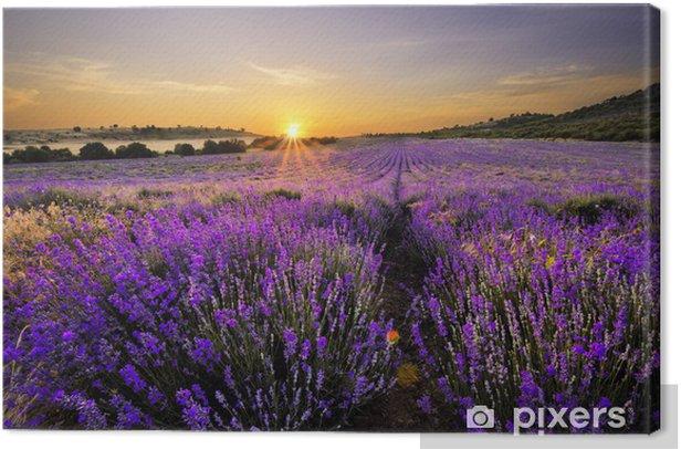 Tableau sur toile Coucher de soleil sur un champ de lavande - Thèmes