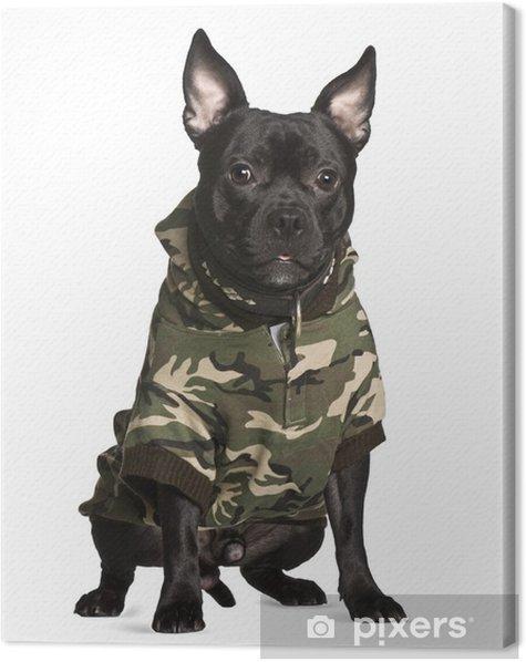 Tableau sur toile Croisement chien en tenue de camouflage, assis - Mammifères