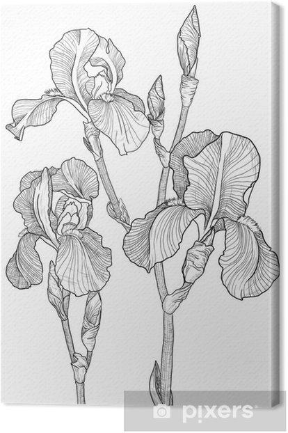 Tableau sur toile Croquis du bouquet d'iris en fleurs -
