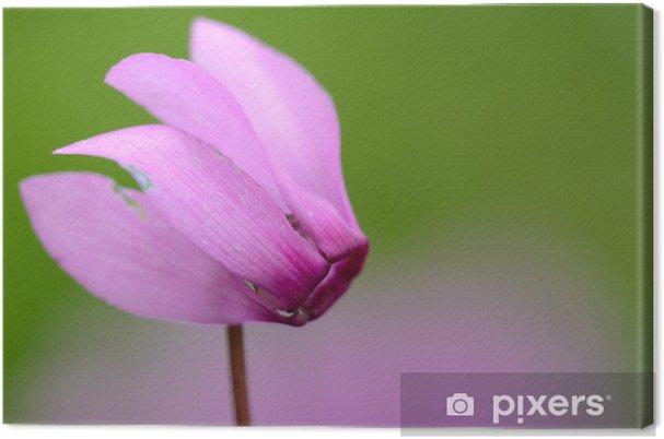 Tableau sur toile Cyclamen - Fleurs
