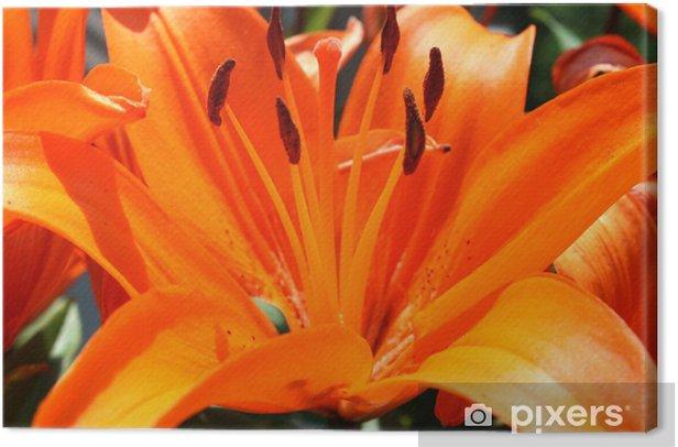 Tableau sur toile D'Orange Summer - Fleurs