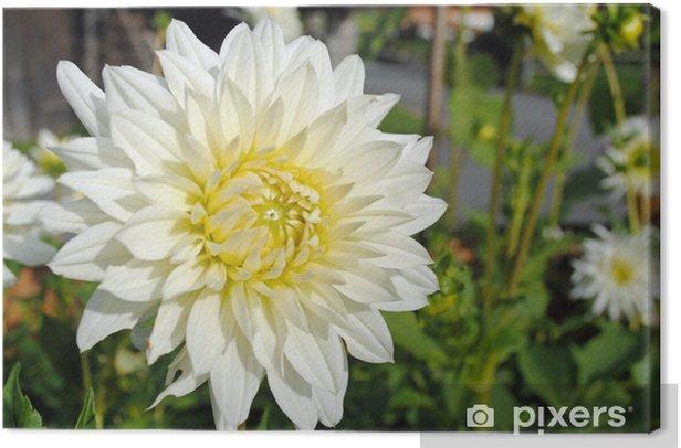 Tableau sur toile Dahlie - Fleurs