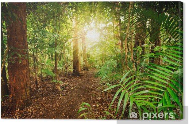 Tableau sur toile Dans la forêt tropicale australienne - Thèmes