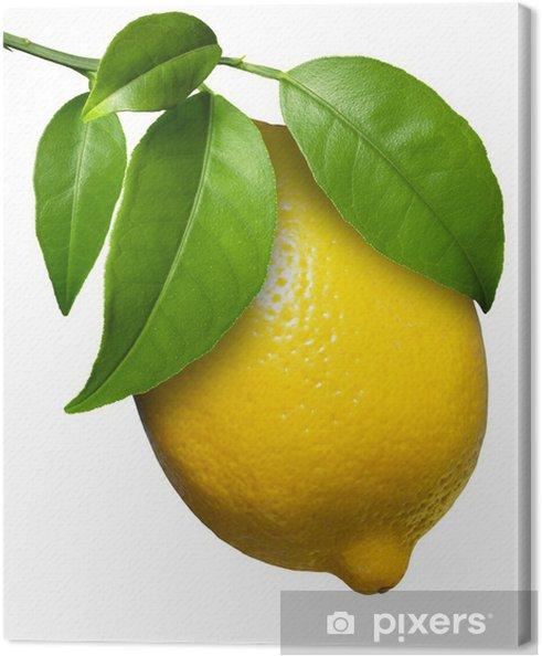Tableau sur toile De citron frais - Fruits
