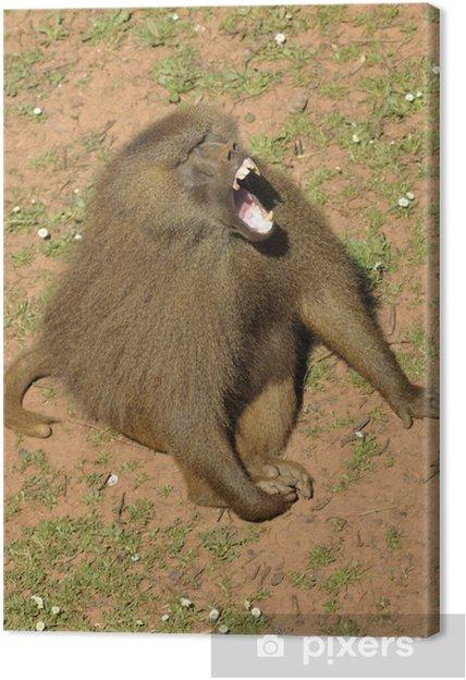 Tableau sur toile De dents de babouin. - Animaux marins