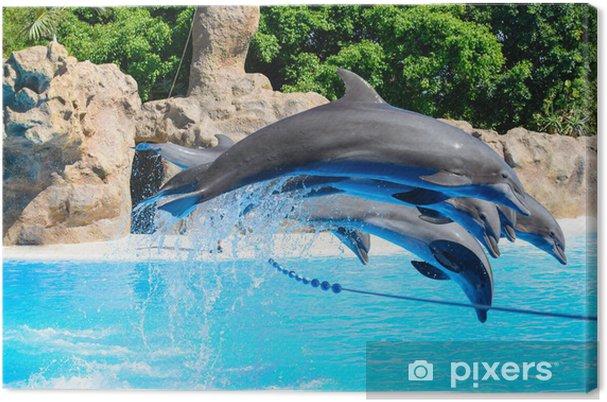 Tableau sur toile Delfines - Thèmes