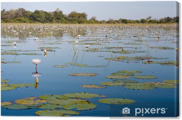 Tableau sur toile Delta de l'Okavango, au Botswana - Fleurs