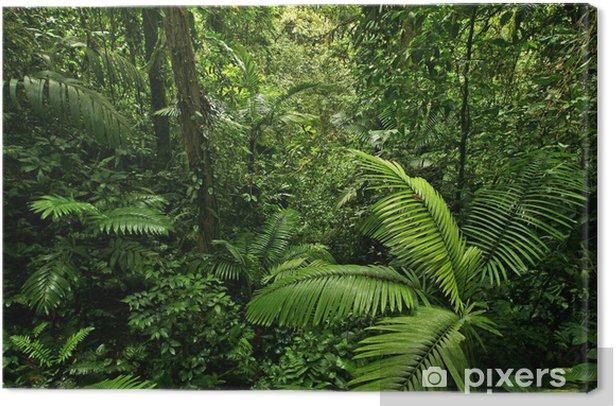 Tableau sur toile Dense Tropical Rain Forest - Destin