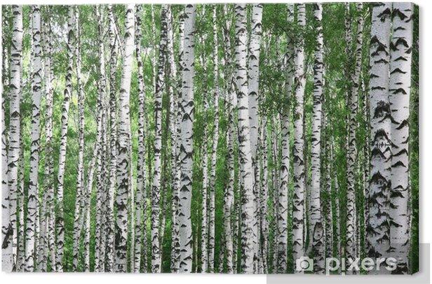 Tableau sur toile Des troncs de bouleau d'été - Thèmes