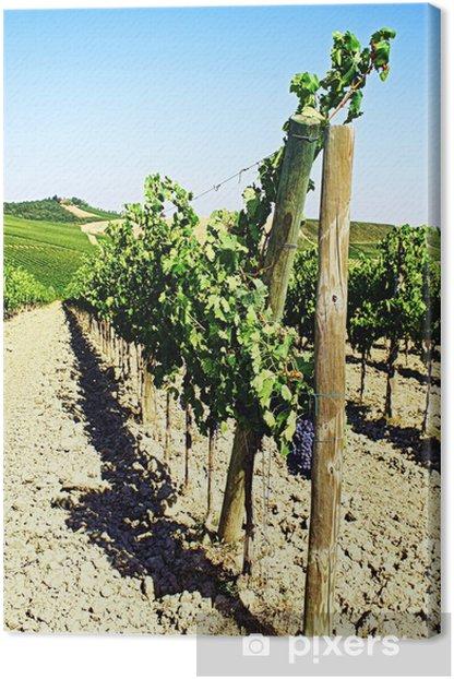 Tableau sur toile Détail d'une vigne sur un coteau dans la campagne à l'automne - Europe