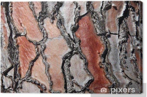 Tableau sur toile Détail de l'écorce de pin en rouge - Abstrait