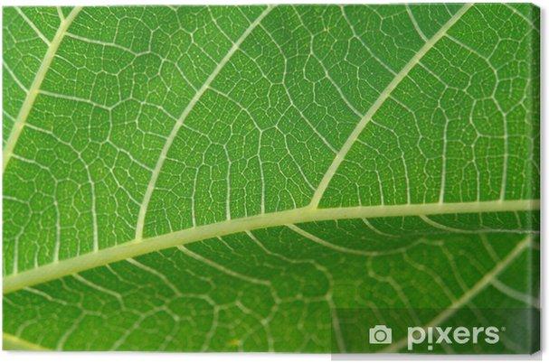 Tableau sur toile Détail des feuilles - Plantes