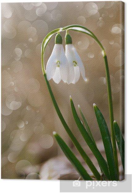 Tableau Sur Toile Deux Belles Fleurs Perce Neige Soft Focus Parfait