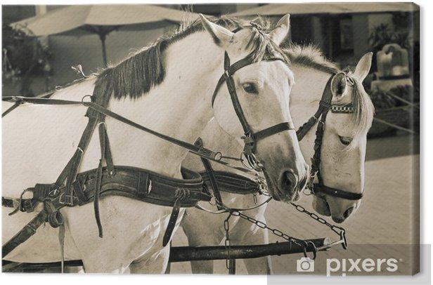 Tableau sur toile Deux chevaux blancs - Mammifères