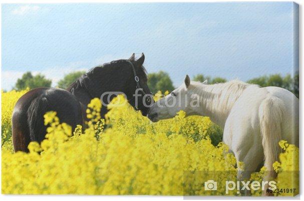 Tableau sur toile Deux chevaux dans le viol - Mammifères