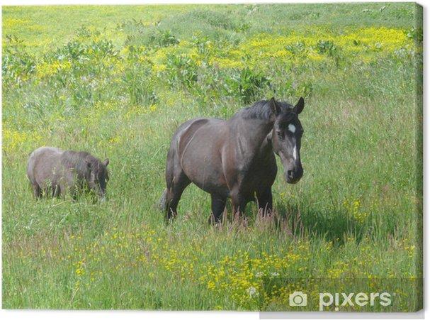 Tableau sur toile Deux chevaux qui paissent sur la floraison - Mammifères