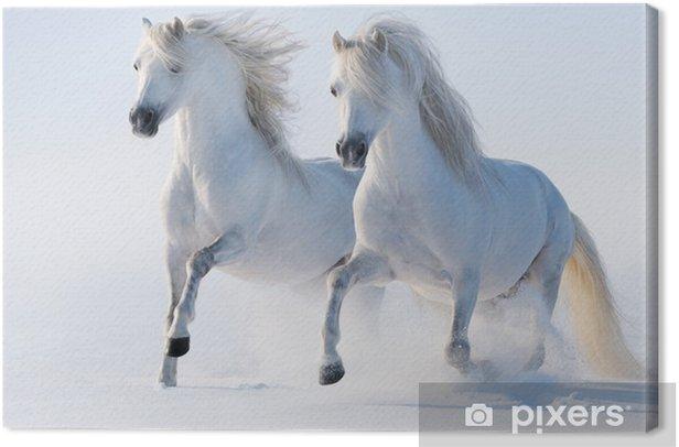 Tableau sur toile Deux galop des chevaux blancs comme neige - Thèmes