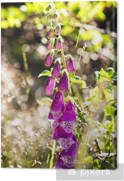 Tableau sur toile Digitale ou Digitalis purpurea - Fleurs