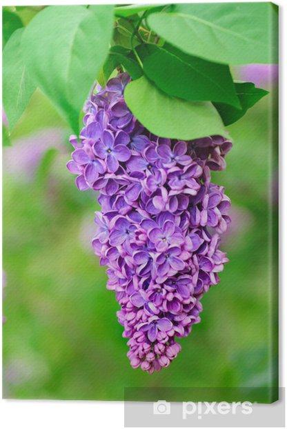 Tableau sur toile Direction des fleurs de lilas - Bonheur