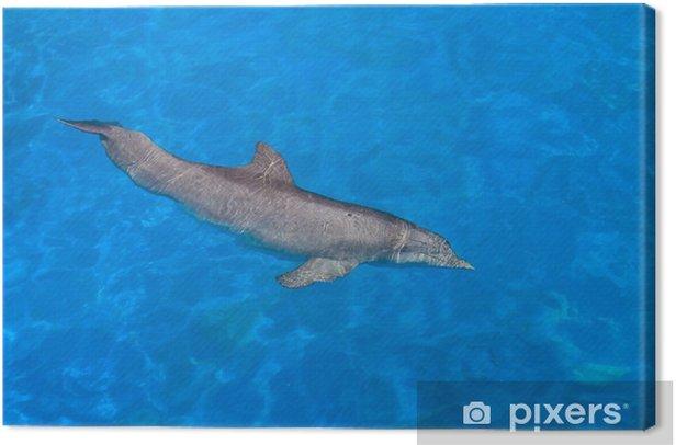 Tableau sur toile Dolphin Swim - Animaux marins