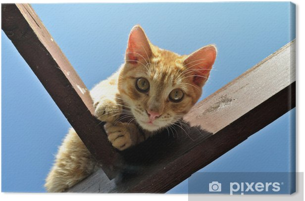 Tableau sur toile Domestic cat - Mammifères