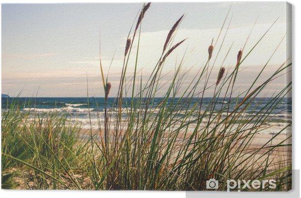 Tableau sur toile Dune herbe dans la lumière du matin :) - Thèmes