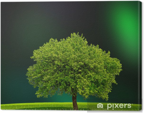 Tableau sur toile Eco Green Zone - Arbres