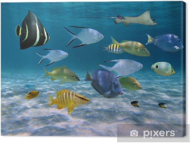 Tableau sur toile École de poisson sur un sol de sable de l'océan - Thèmes