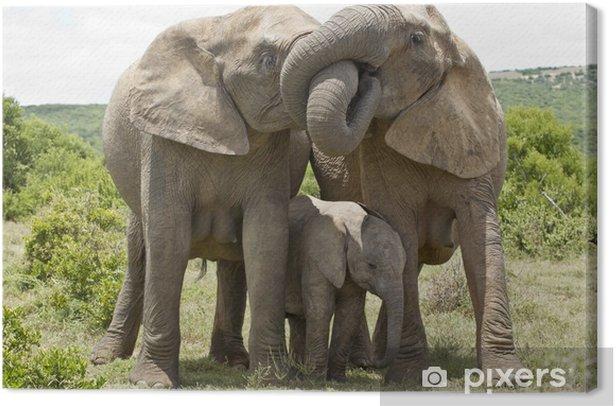 Tableau sur toile Elephant affection - Thèmes