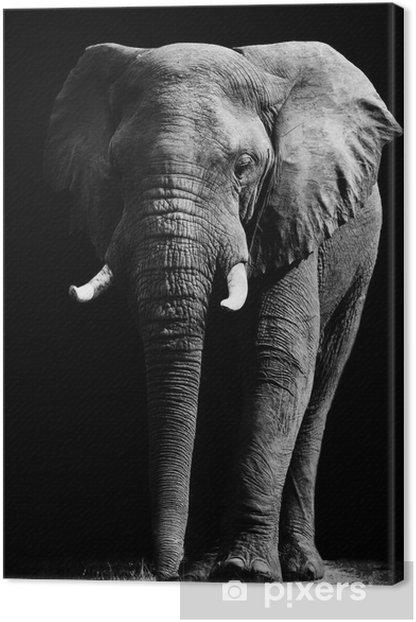 Tableau sur toile Elephant isolé sur fond noir -