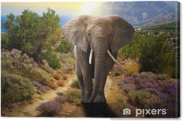 Tableau sur toile Éléphant marchant sur la route au coucher du soleil - Thèmes
